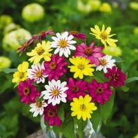 Летние цветы, аромат-ароматизатор