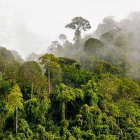 Лес после дождя, аромат-ароматизатор