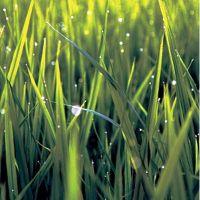 Свежескошенная трава, аромат-ароматизатор